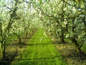 Big_orchard