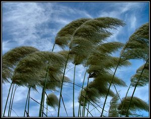 Big_wind-blowing